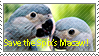 Save the Spix's Macaw Stamp by GreenWingSpino32