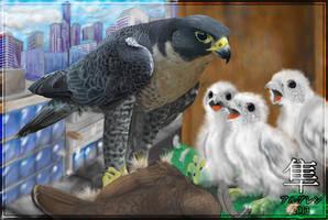 Peregrine Falcon Nest by Algren-Hayabusa