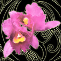 Opeth Orchid by Opeth0012