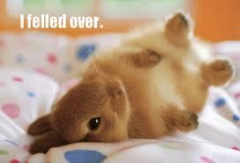 he felled over!!! (sew cute!!) by finlanddarkangelwolf
