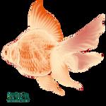 KCS_Fish_02