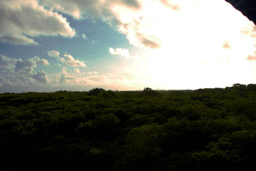 Mangroove Forest in Bali by Xavi3r89