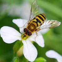 Insect Macro by Deus-est-femina