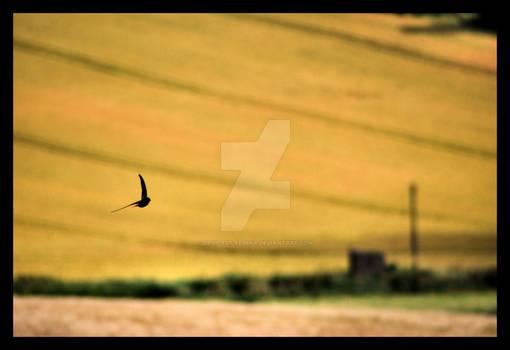 Wheat field flight
