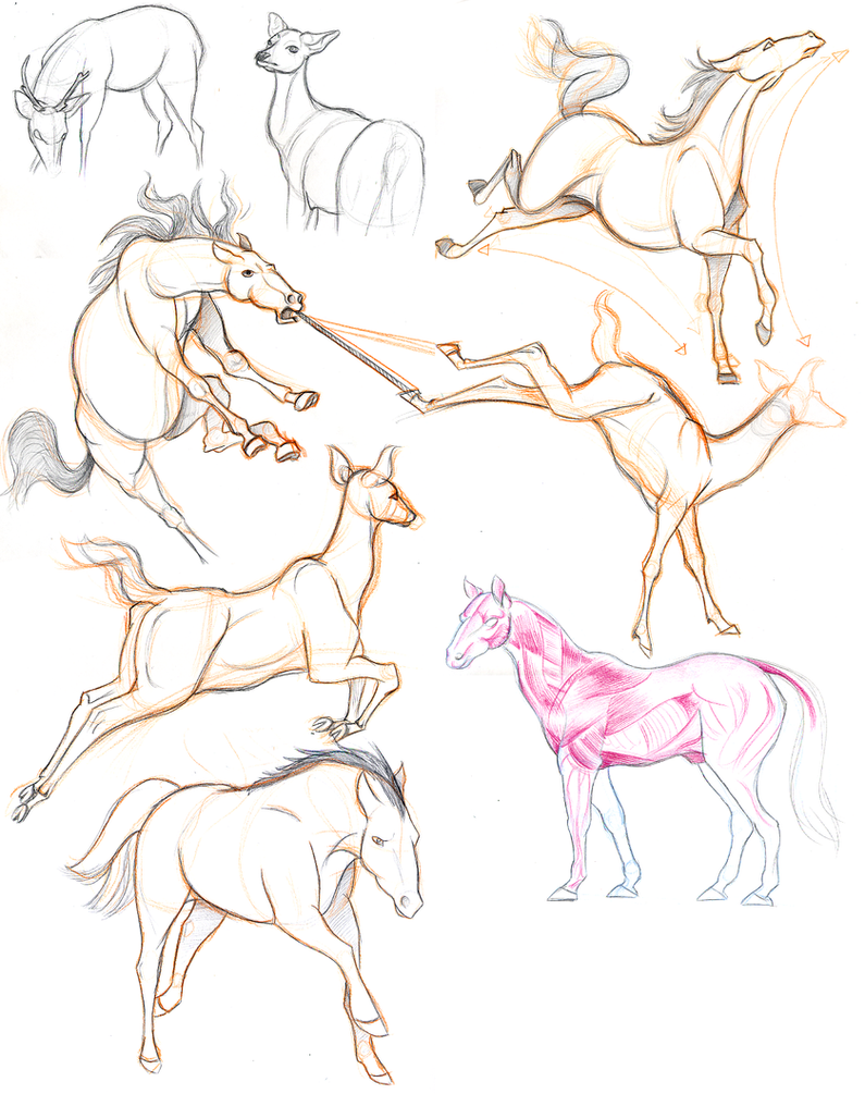 Horse and Deer Studies by S-tygian