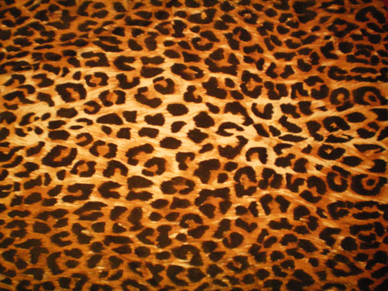 Leopard Print Texture 1 by danimax-stock