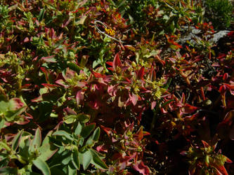 Planta andina 7 by serolero