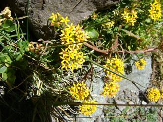 planta andina 5 by serolero