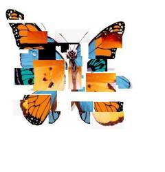 Butterfly by scarlettcrow