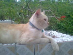 naznaz95's Profile Picture