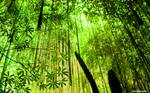 Hanging Greens
