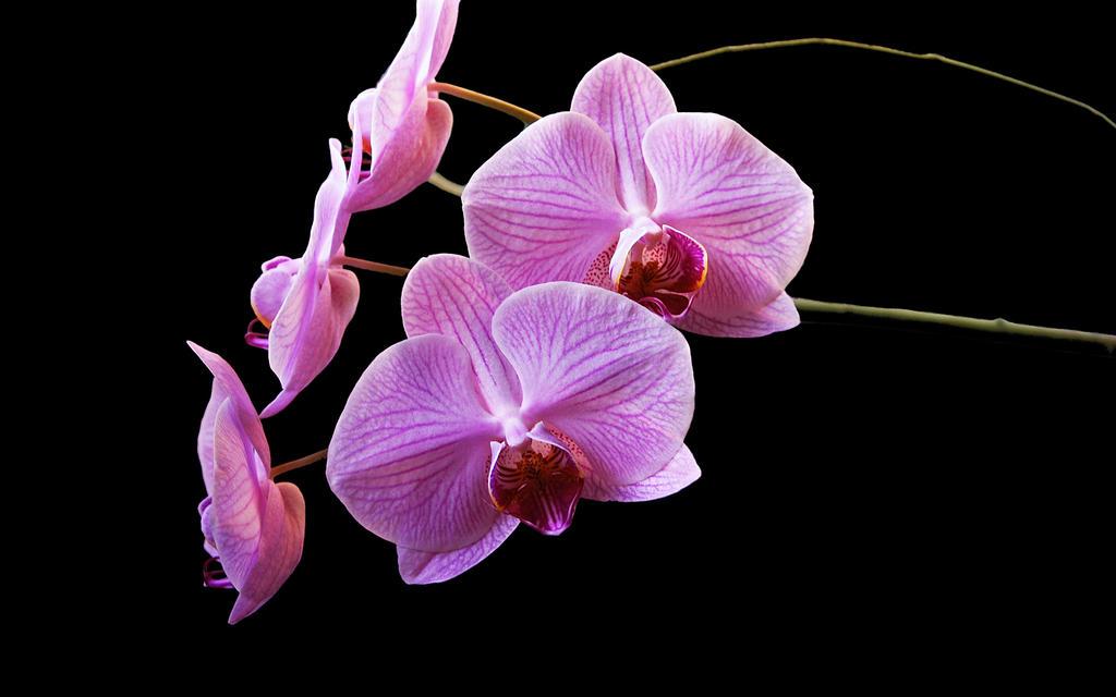 Fleur 29 WS by Casperium