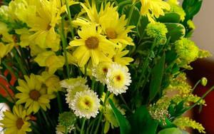 Remembering Spring WS