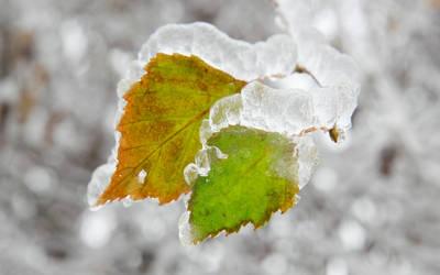 Frozen Companions WS by Casperium