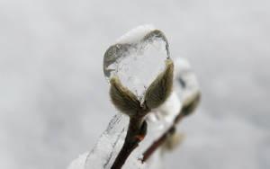 Winter's Heart by Casperium