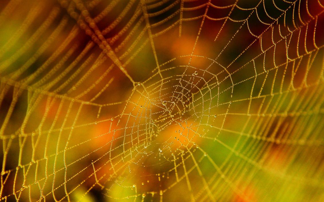 Halloween Spider Web by Casperium