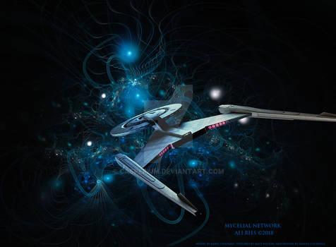 Mycelial Network by Ali Ries 2018