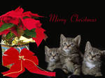 Merry Christmas by Casperium