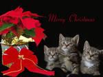 Merry Christmas by Casperium