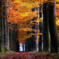 Herfst by Oer-Wout