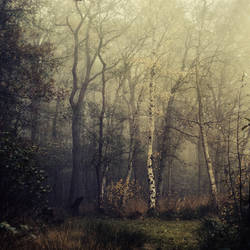 Prelude by Oer-Wout