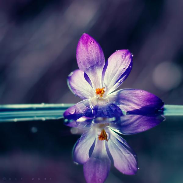 Ma Fleur by Oer-Wout