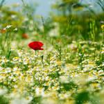 Mellow Meadow