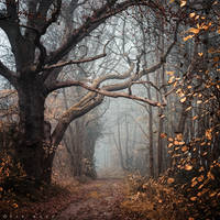 Autumn Mantra by Oer-Wout