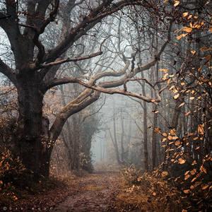 Autumn Mantra