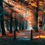 Ordinary woods