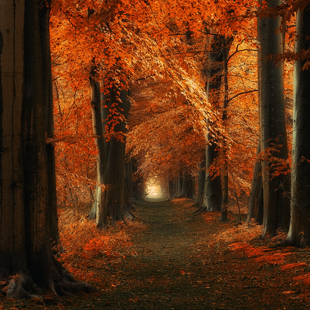 The way Home by Oer-Wout