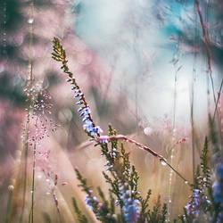 Heaven awaits You by Oer-Wout