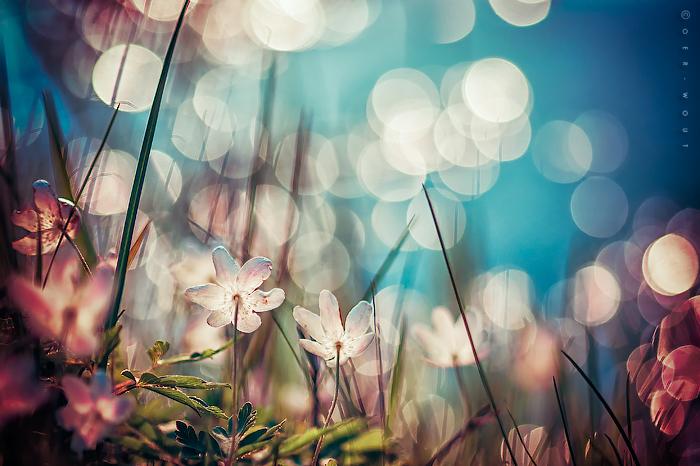 In Light