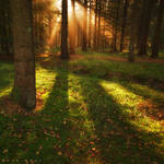 Dream the woods Awake
