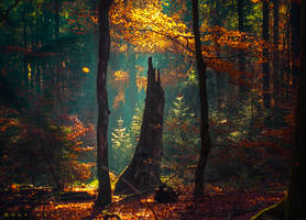 Beauty Abounds by Oer-Wout