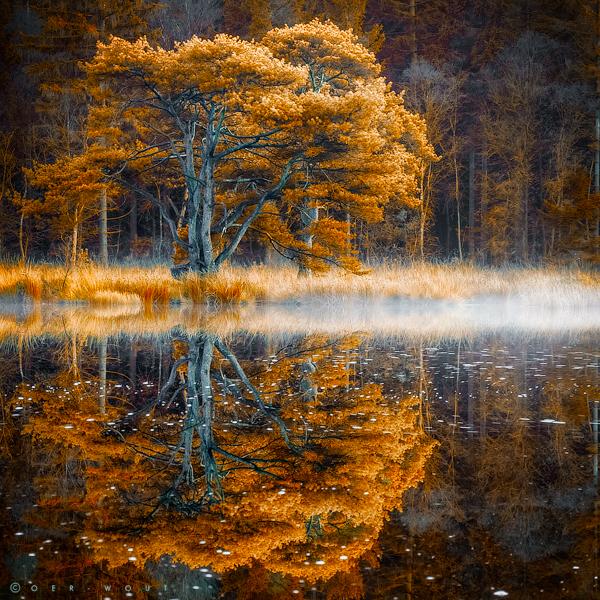 REFLEKSIJA - Page 2 Silent_waters_600_by_oer_wout-d6r5e59