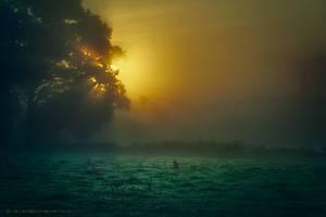 Re-Awake by Oer-Wout