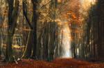 Light is Destiny by Oer-Wout
