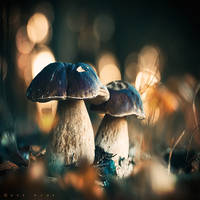 Funky Fungi II by Oer-Wout