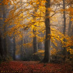 Rooted in Oneness by Oer-Wout