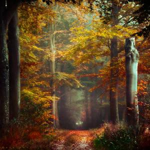 Autumn's Embrace