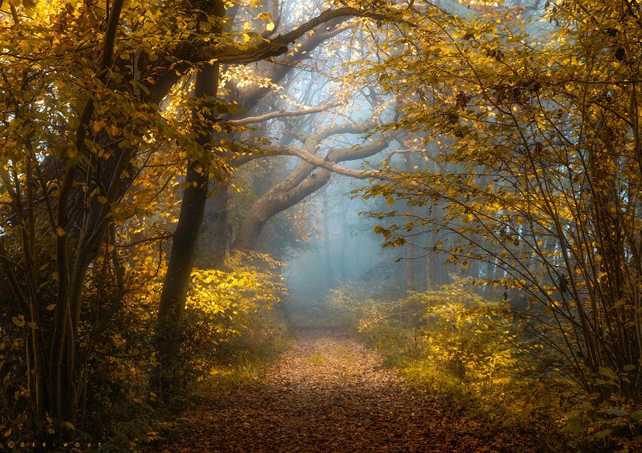 Loving Light by Oer-Wout
