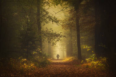 All is Dream by Oer-Wout