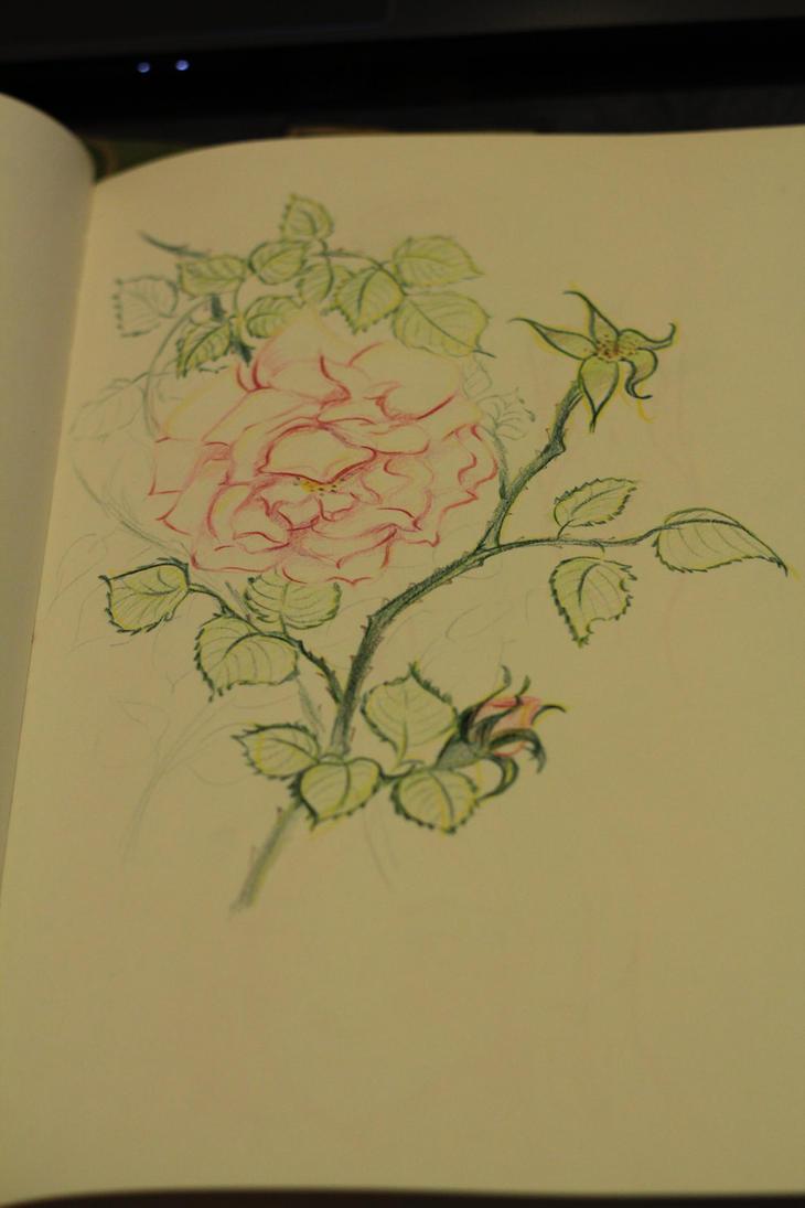 Rose by NightmarishAlice