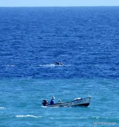 A whale behind