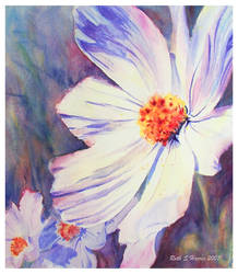 White Cosmos by rsharts