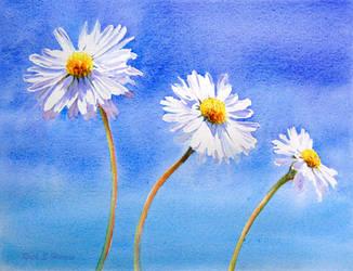 Daisy, Daisy by rsharts