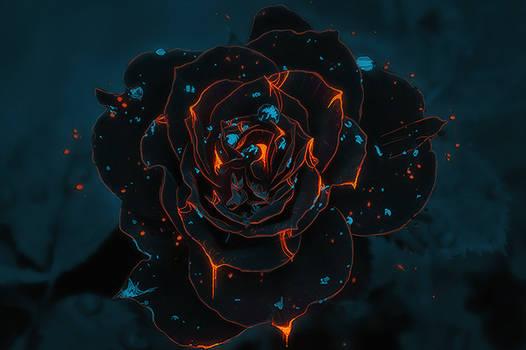 glowrose
