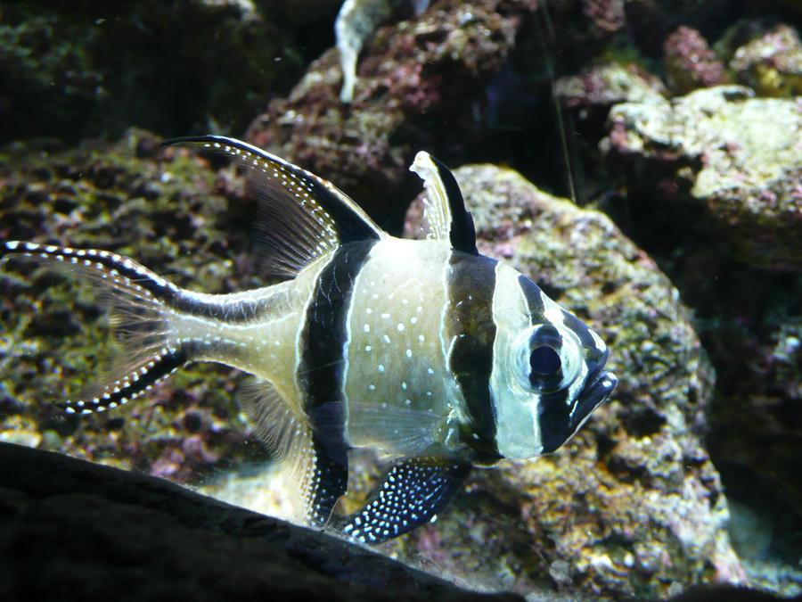 Buy Aquarium Fish Online Bangalore