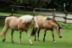 Ponies Walking and Stalking